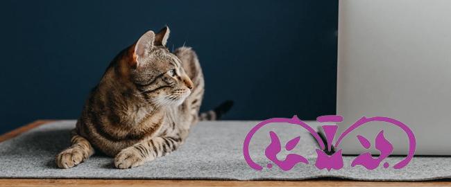 Comunidad de traductores con gatos: los beneficios de trabajar en casa acompañados